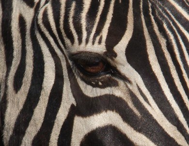 Where The Wild Things Are (Etosha Pan, Namibia)