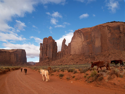 Wild horses, Monument Valley Navajo Tribal Park, Navajo Nation, April 15, 2006.