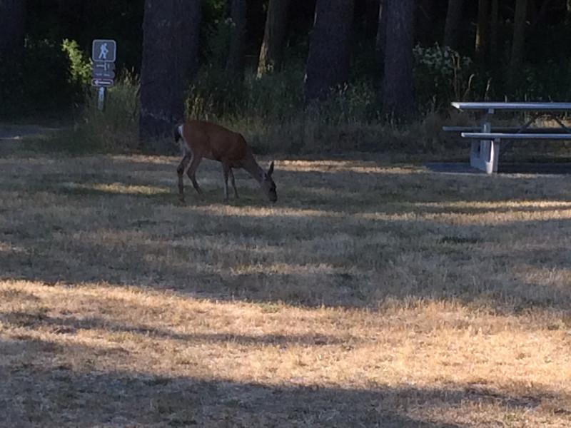 Oh deer! Fort Ebey State Park