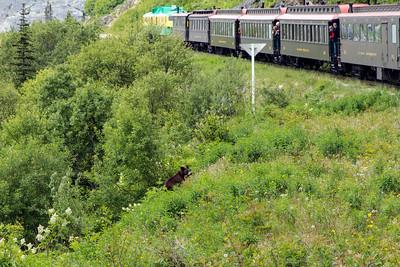 A bear near the rail tracks