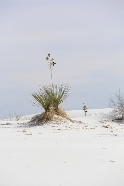 The sand shifts around the plants