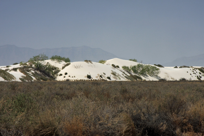 There is some vegetation as you enter the park.  It quickly gives way to the larger dunes.
