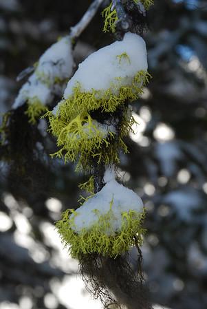 Whitecap Alpine