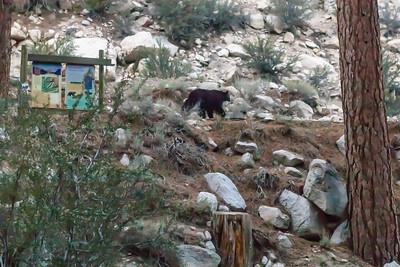 Bear in camp!