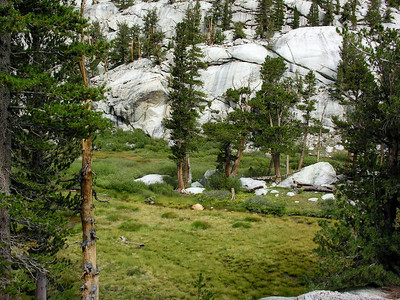 High Country Meadow 2