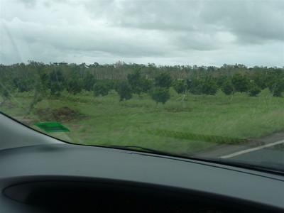 All trees had got blown sideways a bit...