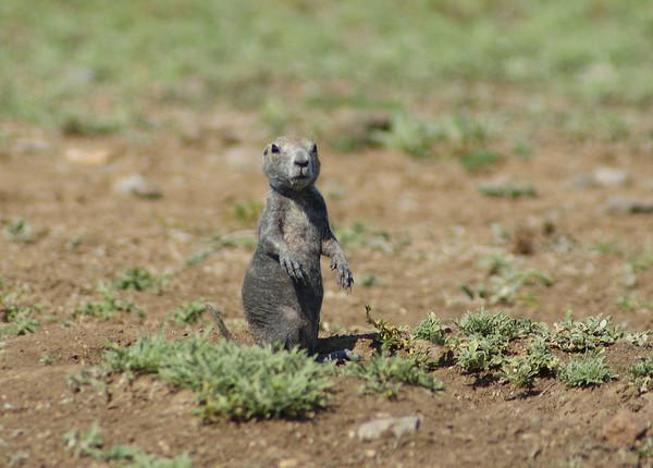 Labor Day Animals at the Wichita Wildlife Refuge