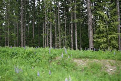 Wild Bears in British Columbia - June 2012