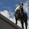 12th Street burro