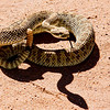 A friend we met on the way to Chaco Canyon