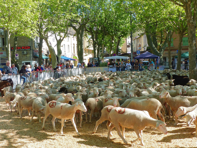 """""""Transhumance"""" festival in a village en route -- celebrating the annual movement of herds up to mountain pastures"""