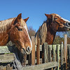 Horses at Wilder Ranch.