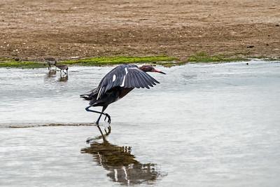 Wildlife at Sanibel Island, Florida