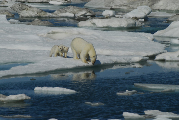 2007 Siberian Arctic