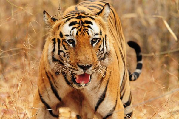 2008 WWF India