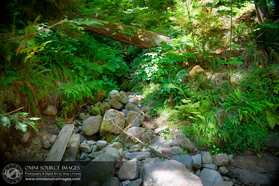Terwilliger / Cougar Hot Springs Cool Creek Bed
