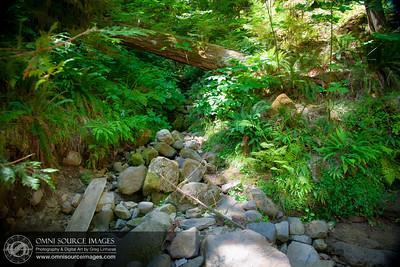 Terwilliger / Cougar Hot Springs Cool Creek Bed