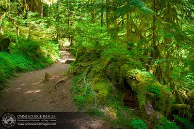 Terwilliger Hot Springs Trail - Willamette National Forest, Oregon