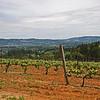 Lange Vineyard