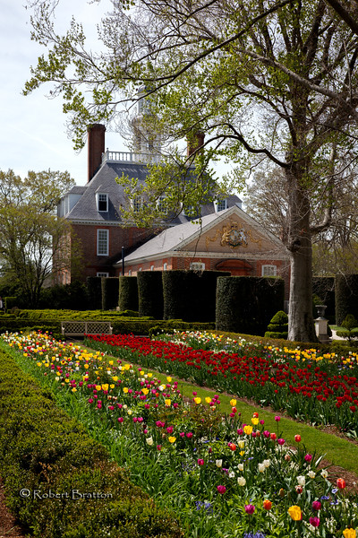 Governor's Palace Tulip Beds