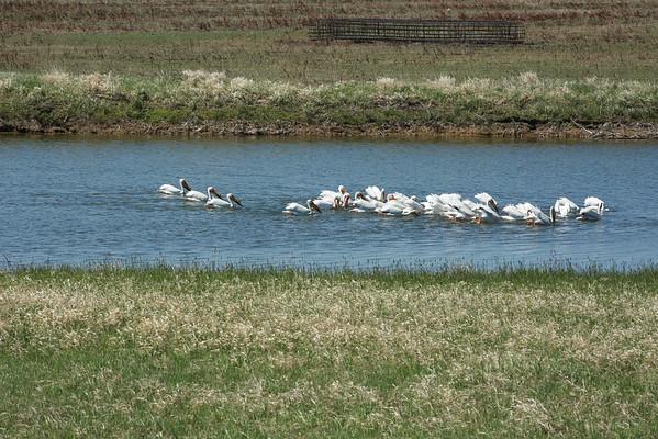 Williston- North Dakota and the Great State of North Dakota