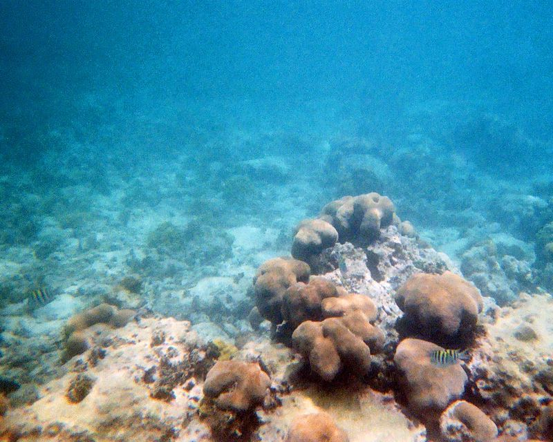 This and the following photos were taken with a disposable camera, so the quality is somewhat lacking.  They do though, give you an idea of our snorkeling views.