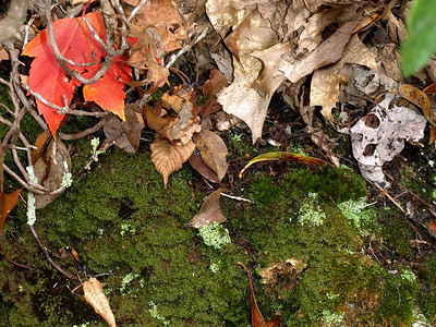 Moss and leaves.