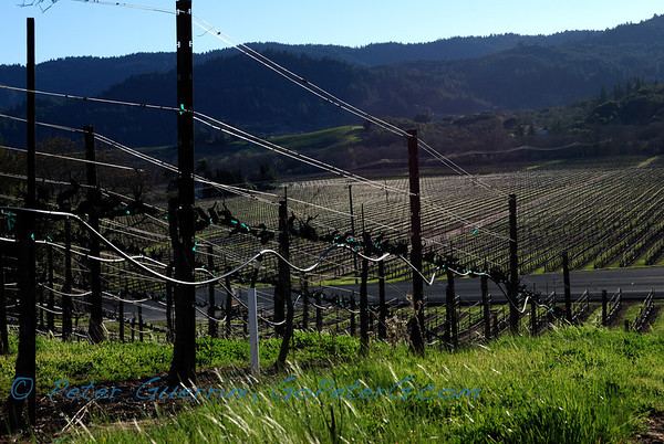 February in Dry Creek Valley