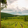 Hillsbourgh Vineyard, Virginia, along State route 9.