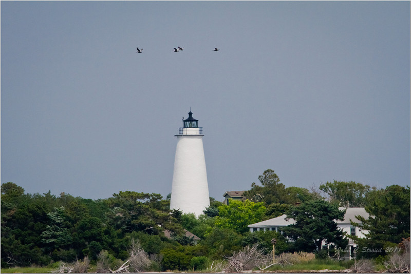 Pelican formation over Ocracoke Lighthouse