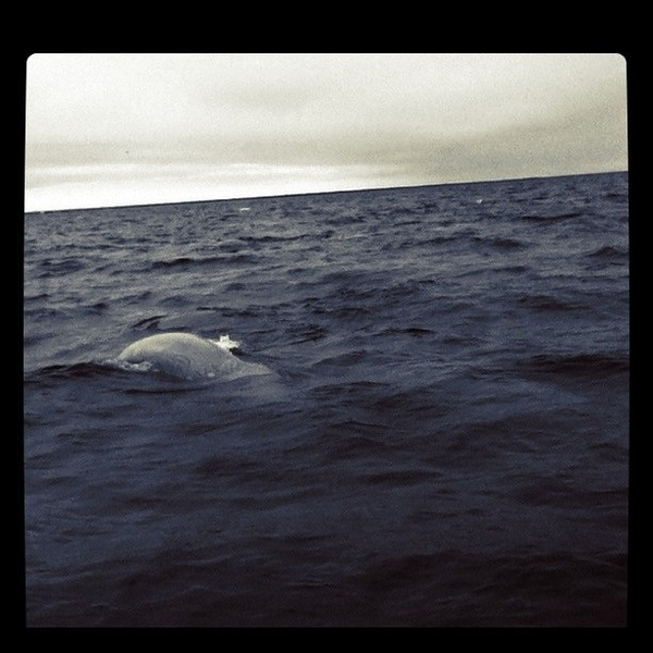 First outing to see beluga whales in Churchill - amazing #itsmbtime