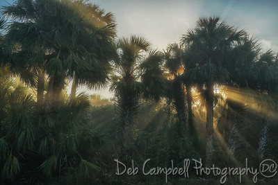 Sunrays through the Palms