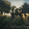 Sunrays through the Palms