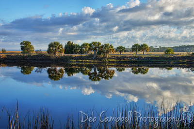 Reflections of the Refuge