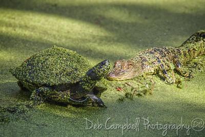 Swamp Friends