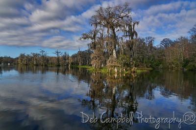 Views of Wakulla Springs