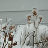 Iced Over Plants