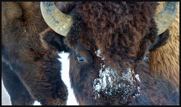 Winter in Wonderland: Yellowstone 2014