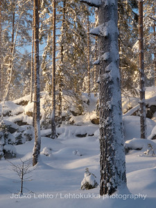 Lumi. SnowLumi