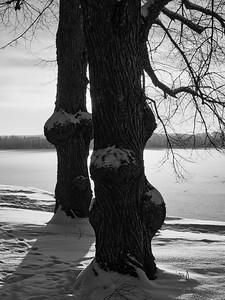 Trees by Pyhajarvi bw