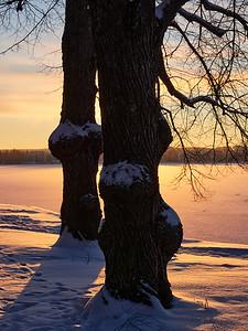 Trees by Pyhajarvi