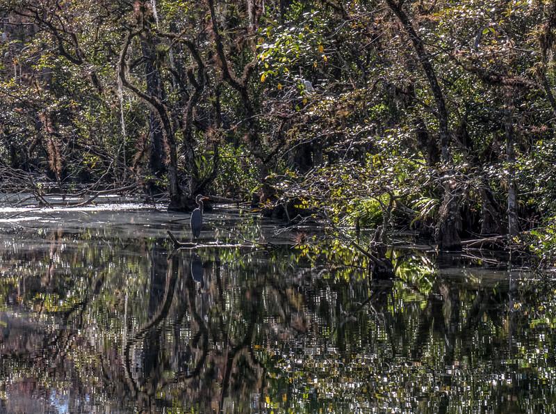Somewhere in Everglades