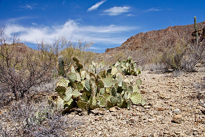 Scene near Arizona-Sonora Desert Museum just outside of Tucson, Arizona.  March, 2011.