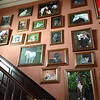 The Inn's owner's pet gallery