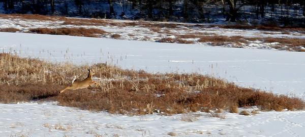 Run, Bambi, Run !!!