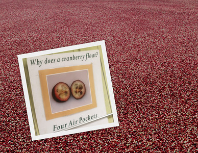 Warrens Cranberries Harvest & Doctor Evermor's Studio & Art Park
