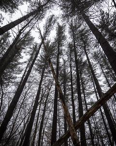 Stewart Count Park - White Pines