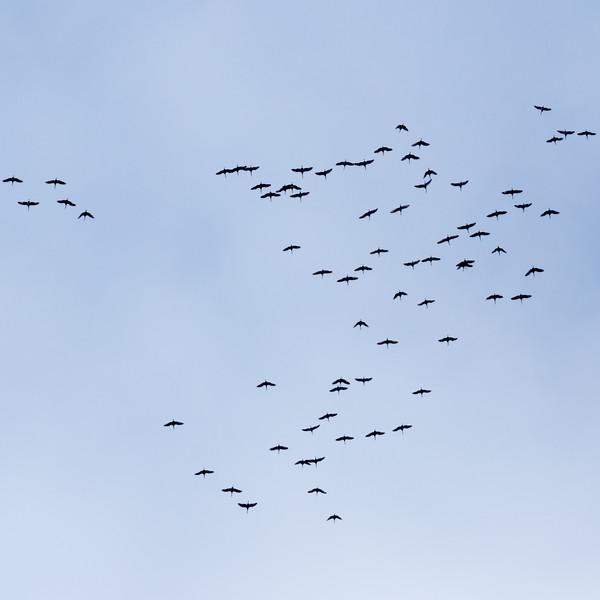 Cranes! And More Cranes!