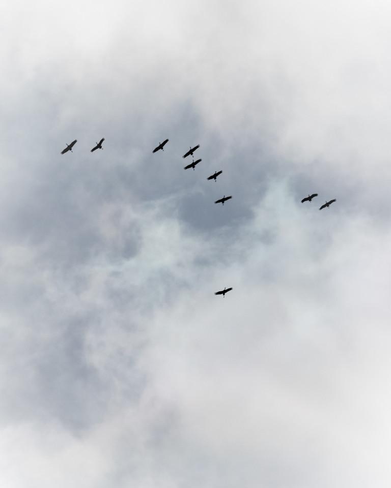 Cranes Descent