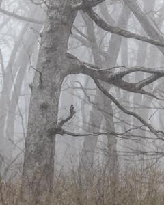 Stewart County Park Hike
